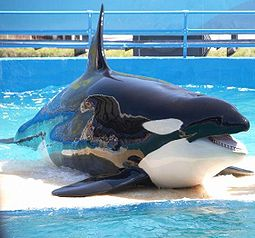 antibes_orque_marineland
