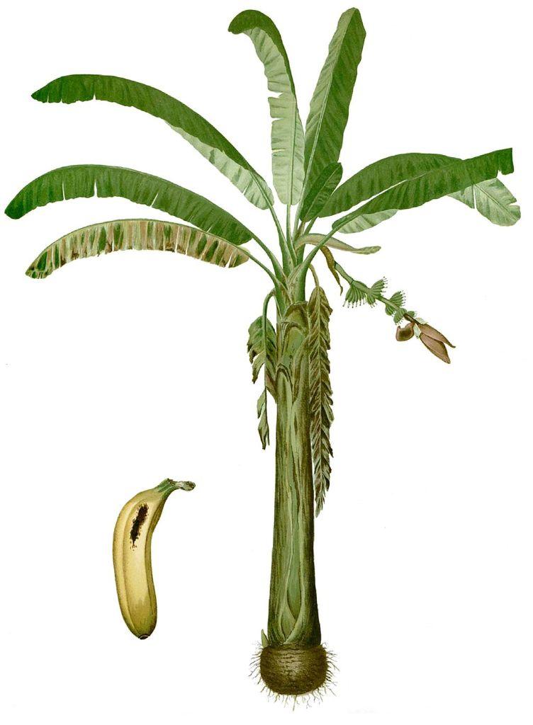 République bananière ?
